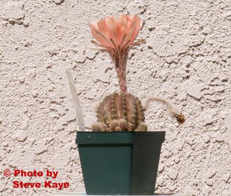 Flower3264