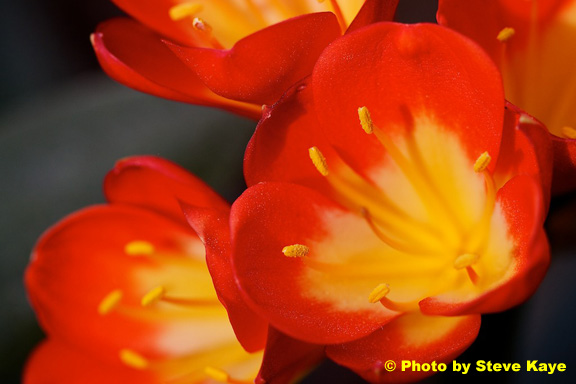 Flower22c