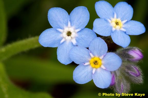 Flower22b