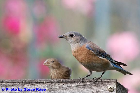 Bird22a